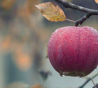 Apple Water Droplets Fruit Moist Dew Dewdrops