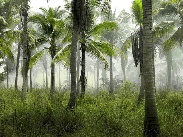 Palm Trees Grass Field Nature Tropical Exotic